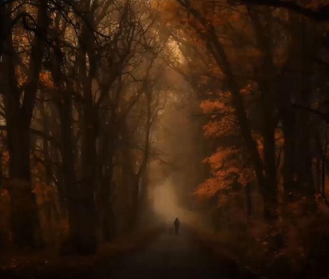 Person walking a trail through a dark misty forest.